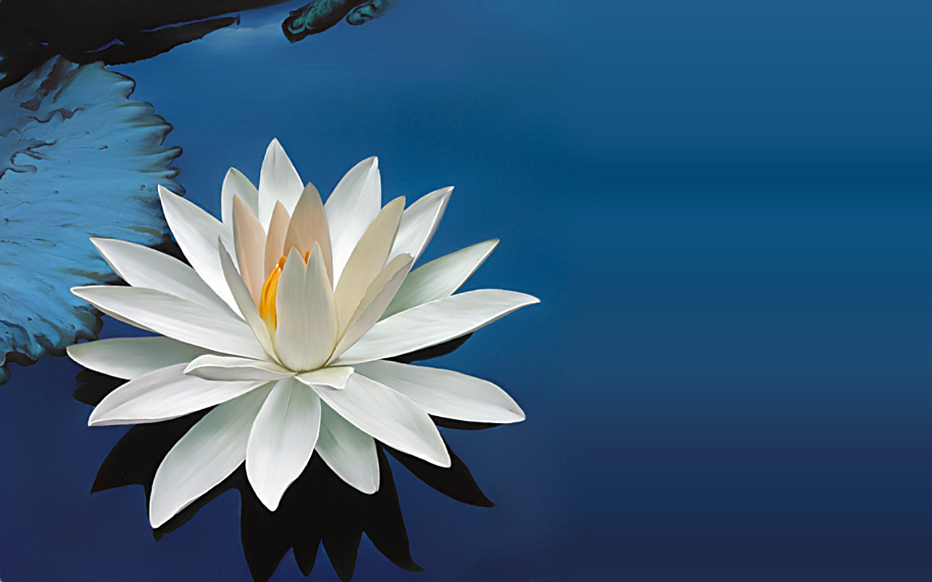 50959543 - the white lotus flower reflect with water in ...