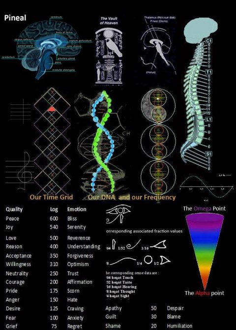 DNA Frequency