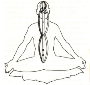 Nadis and Chakras with criss cross