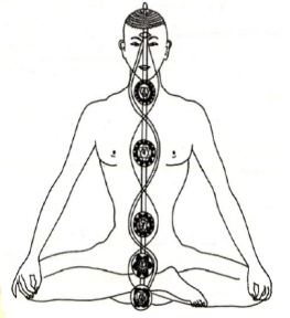 Nadis and Chakras