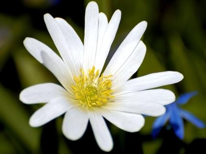 White_Flower