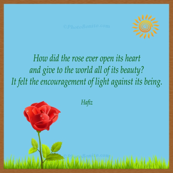 Rose open heart